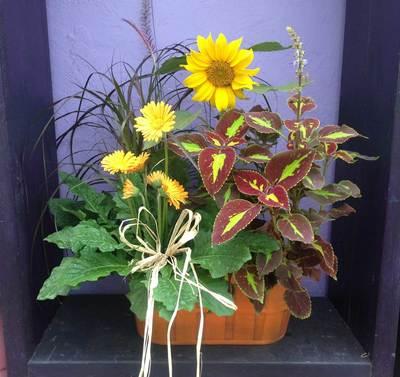 Sun Jul 04 2021 Sunny Sunflowers